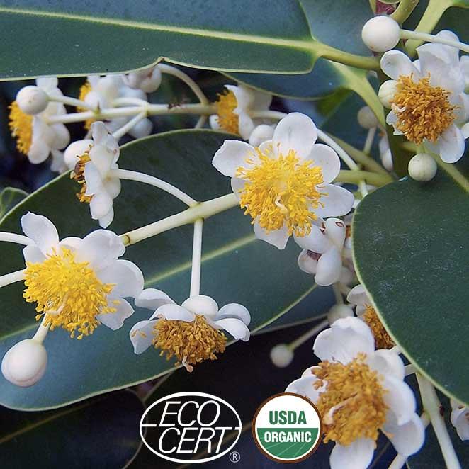 Fleurs-sur-branche-ecocert