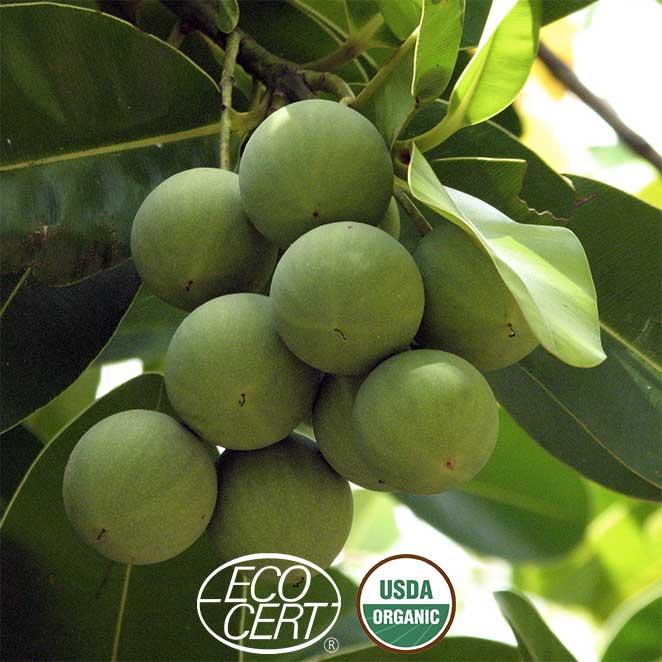 Fruits-sur-branche-ecocert